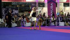 Bloodhound at dog show Stock Footage
