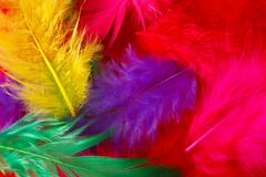 Multi-colored feathers background Stock Photos