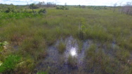 Stock Video Footage of Everglades flying low over the sawgrass