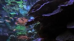 Big Aquarium Colorfull Fish Clown Fish Coral sea plants underwater Stock Footage