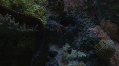Aquarium Shrimp and Fish underwater - stock footage