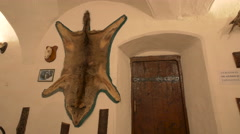 A bear skin trophy hanging on a wall at Corvin Castle, Hunedoara Stock Footage