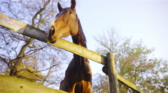 Big horse posing over wooden fence 4K Stock Footage