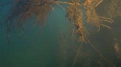Algae spotlight under water Stock Footage
