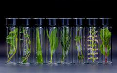 Bottle of essential oil with herb holy basil flowers, rosemary,oregano, aloe Stock Photos