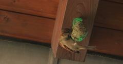 Sparrow flys away from seed-ball Stock Footage