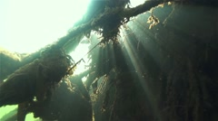 Tree roots submerged under water and illuminated by the sun on slow motion Stock Footage