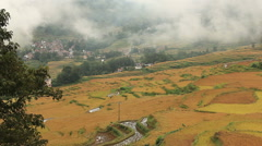 Autumn Rice Terraces Yunnan Province Stock Footage