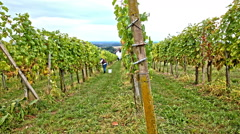 Vineyard with landscape view in background Stock Footage