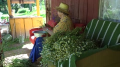 Old grandmother woman with hat pick chamomile flower herbs. 4K Stock Footage