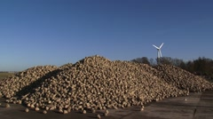 Outdoor pile of fresh harvested sugar beets on a concrete underground, Stock Footage