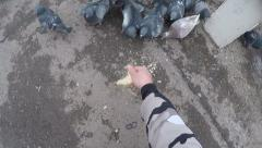 Hungry pigeons eating bread. Stock Footage