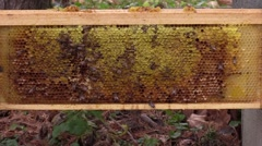 Honey bees on honey filled frame Stock Footage