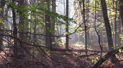 beautiful fall autumn morning forest colors trees nature sunlight - stock footage