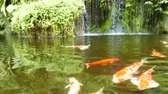 Colorful Koi Fish In The Surface Of A Decorative Pond Stock Footage