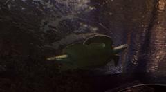 Sea turtle in beautifully decorated Marine Aquarium Stock Footage