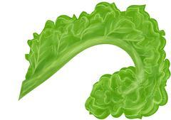curly kale - stock illustration
