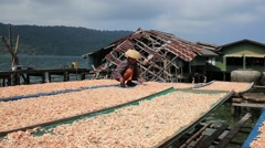 Thai woman working with dry shrimps in the fishing village Stock Footage