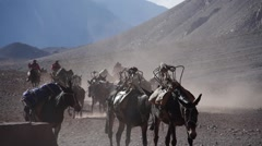 Caravan of mules with luggage (close up). Patagonia - stock footage