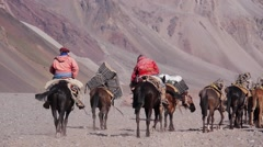 Caravan of mules with luggage. Patagonia - stock footage