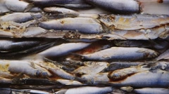 A large block of frozen fish in the freezer - stock footage