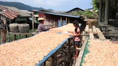 Thai woman and girl working with dry shrimps in the fishing village Stock Footage