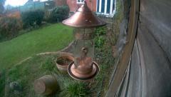 Grey Squirrel on nut feeder Stock Footage
