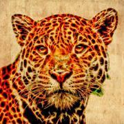 Jaguar illustration - stock illustration
