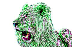 African lion illustration - stock illustration