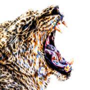 African lion illustration Piirros