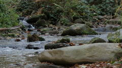 Rapid creek flowing, stones in water, river, cascades, untouched nature, forest. Stock Footage
