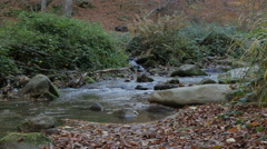 Fast stream flowing through the forest, river water, close up, untouched nature. Stock Footage