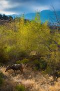 Wild Deer Colorado Wildlife Stock Photos