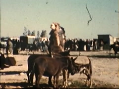 Israeli men staining with Camels 1 (Vintage 1950's) Stock Footage
