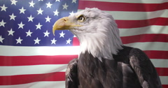4K Close up of American Bald Eagle against animated background of American flag  Stock Footage