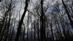 Forest Silhouette Hyperlapse Mammoth Cave National Park Kentucky Hiking Trail Stock Footage