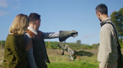4K Impressive owl in flight comes to land on the glove of a visitor to a falconr - stock footage