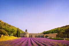 Abbey of Senanque and blooming rows lavender flowers on sunset. Gordes, Luber Stock Photos