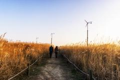 Wild reeds and wind turbines  in haneul park - stock photo
