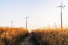 Wild reeds and wind turbines  in haneul park Stock Photos