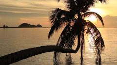 Coconut palm tree silhouette at sunset. Koh Phangan island, Thailand - stock footage