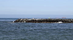 Waves Hitting Breakwater With Birds And Navigational Aid - stock footage