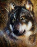 Wolf painting, color  background on paper , multicolor illustration - stock illustration