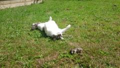 Cat Play With Rat in the garden - stock footage
