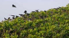 A flock of crows sitting and landing on green tree and fly away Stock Footage