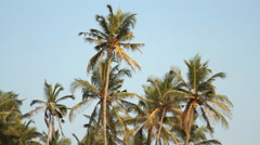 Palm trees over blue sky at sunny day Stock Footage