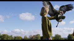 4K Vulture in flight comes to land on glove of a visitor to a falconry centre - stock footage