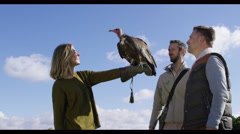 4K Vulture takes flight from the glove of a visitor to a falconry centre - stock footage