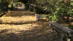 Two antique stone benches with ornaments in botanical garden Stock Footage
