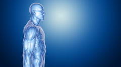 3D human body Anatomy blue background Stock Footage